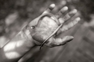 Alain Laboile, Summer of the fawn_3